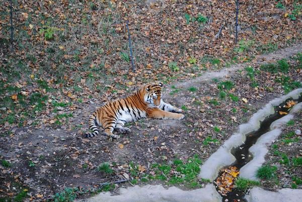Tip na výlet - Zoologická zahrada Plzeň