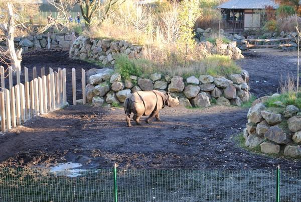 Tip na výlet - Zoologická zahrada v Plzni chová páreček indických nosorežců